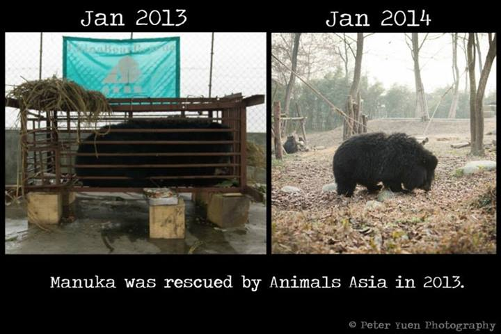 Peter Yuen documented Animal Asia's moon bear rescue effort. Photo via Animal Asia's campaign page in Facebook.