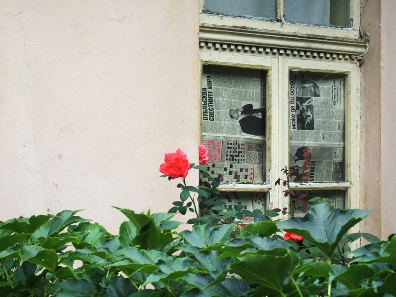 'The rose and the newspaper'