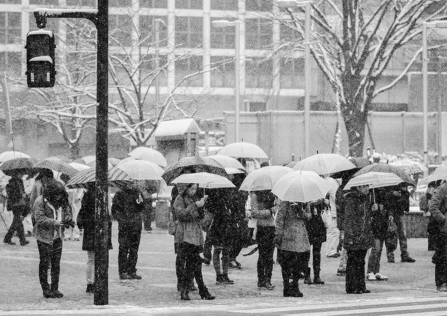 People holding umbrellas in heavy snow. Photo taken on February 8 in Tokyo by flickr user lestaylorphoto (CC BY NC-ND 2.0)
