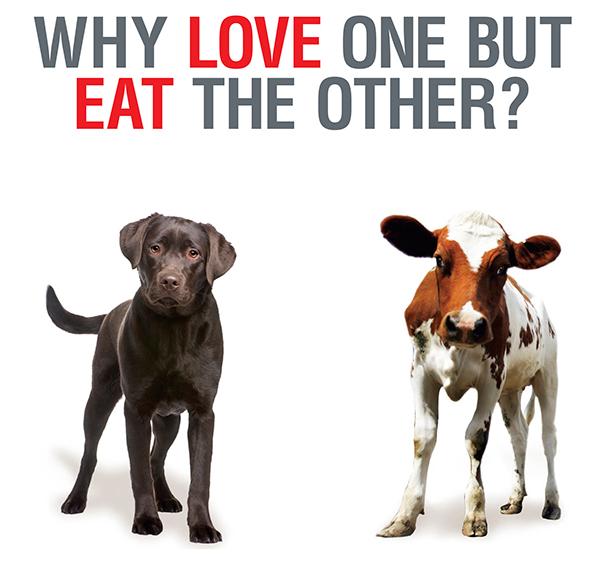 dog_cow