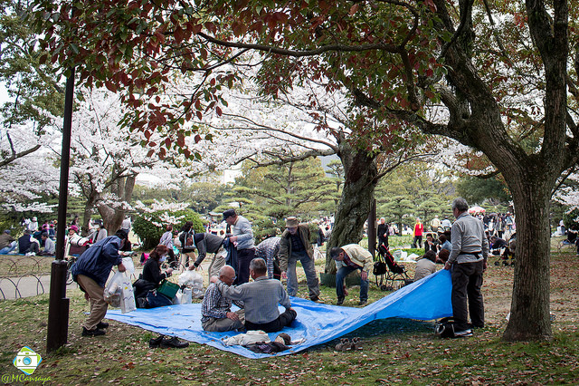 People lay out a tarp at Akashi Castle park. Photo taken April 3, 2014 by Flickr user Manuel Cansaya Jauregi. CC BY-SA 2.0