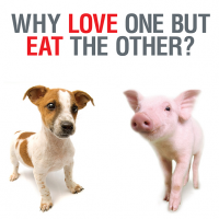 Singapore Poster Campaign Wants Public To Feel Guilty About Meat Consumption · Global Voices