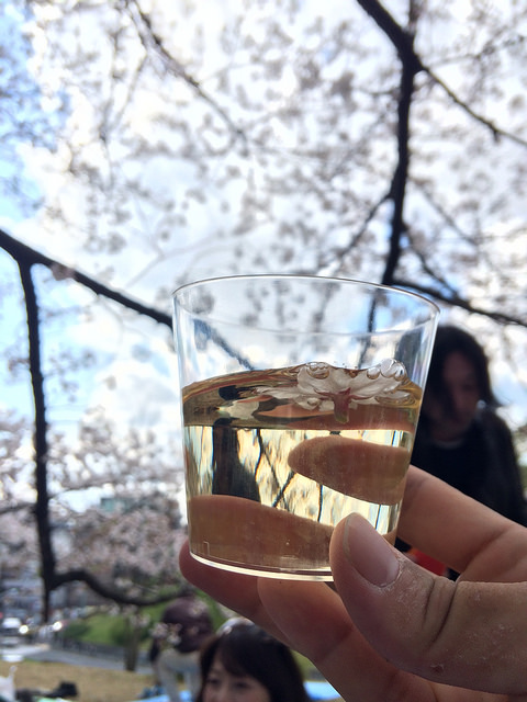 A cherry petal accidentally fell into a drink. Photo taken April 5, 2014 by Shogo Nozaki. CC BY-NC 2.0