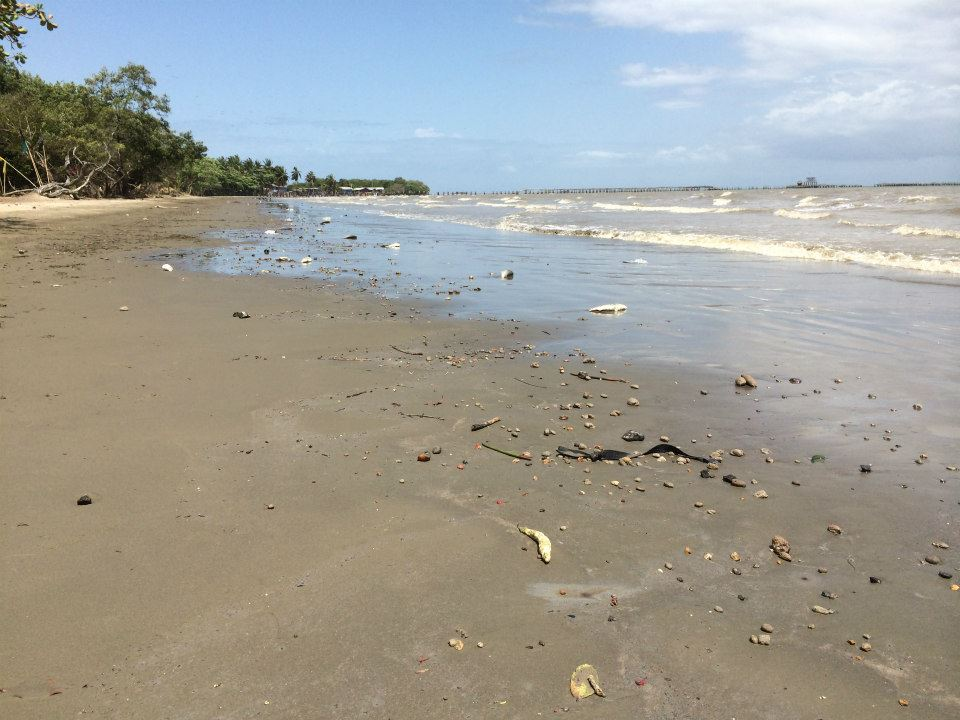 Three months after the oil spill, the beach at La Brea, Trinidad is still strewn with dead fish.  Photo by Merisa Thompson. Used with permission.