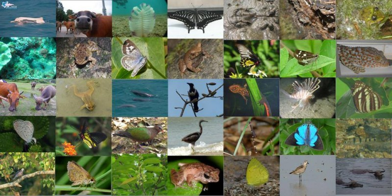 Today is the World Biodiversity Day. Save Lantau Alliance, an advocacy group , put together photos of wildlife found in the city's biggest island in Hong Kong against the government's development plan. Lantau is a landing place for more than 180 speices of migrant birds.