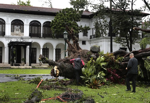 A fallen tree in front of the presidential palace in Manila. Photo from the government's Tumblr page.