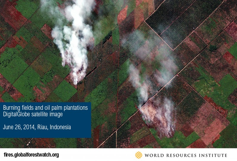 Satellite image showing a burning palm oil plantation.