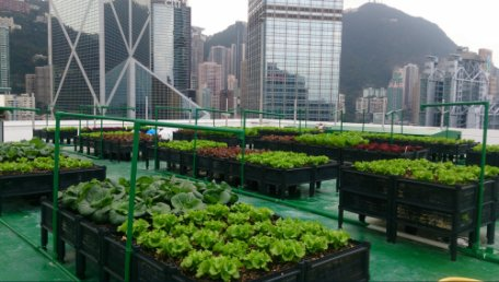 """Go Green Hong Kong"" discussed the benefit of rooftop farming in Hong Kong."