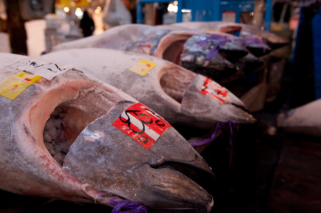 japan bluefin tuna consumption