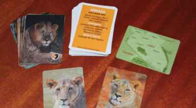 Trading-card-like images and descriptions of lions help Lion Guardians distinguish among individual animals as they work to minimize human-lion conflict. Photo by Stephanie Dloniak