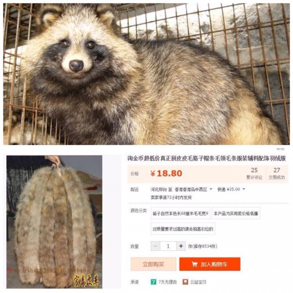 "Raccoon fur is sold for RMB 18 online. Photo from Facebook group, ""No to Cheap Fur""."
