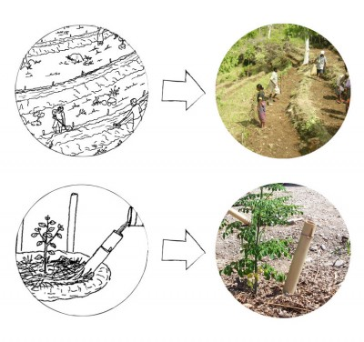 Design and implementation of swales and terraces (top) and bamboo watering pipes (bottom) in Timor-Leste for more efficient water and soil management over time in tropical regions.