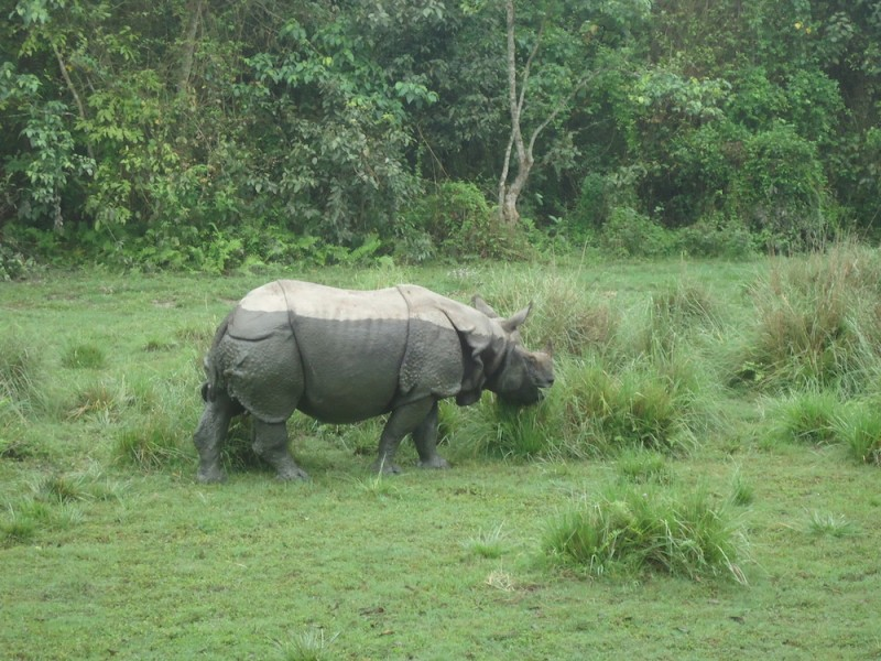 Nepal's Chitwan National Park is home to the second largest population of one-horned rhinoceros. Image by Sanjib Chaudhury