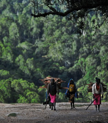 Women carrying firewood emerge from the forest. Photo: Tony Karumba / GroundTruthTens of thousands of Sengwer still live in the Cherangani Hills. KFS rangers have maintained the campaign of evictions through 2014 and into 2015, according to Sengwer leaders. Used with permission from ICIJ.