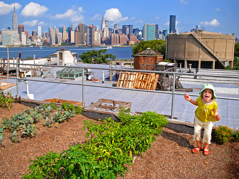 A child stands in an organic garden on a roof in Brooklyn, overlooking the Manhattan skyline. Photo by Flickr user Evan Long. CC-BY-NC-SA 2.0