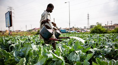 Urban farming is common in Ghana and other sub-Saharan countries. Photo by Nana Kofi Acquah/IMWI. Used with permission.