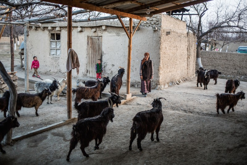 Laily, 70 years old, raises her four grandchildren. Their parents have been working in Russia for over three years. Laily receives a monthly state pension of 3000 Kyrgyz soms (KGS).