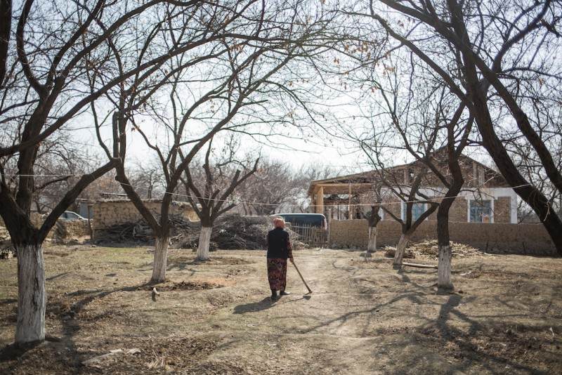 Due to excessive drought, a woman is digging small holes around apricot trees in order to accumulate rainwater. Apricots are the main, and sometimes the only, source of income for many families in Batken. Djangigen village, Batken oblast.