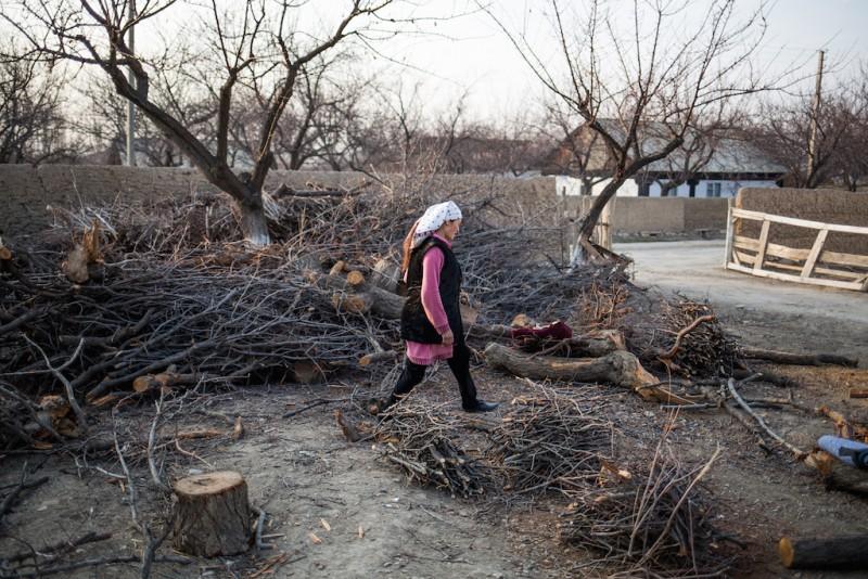 A woman walks through a small grove of trees cut down for winter firewood. Djangijer village, Batken oblast.