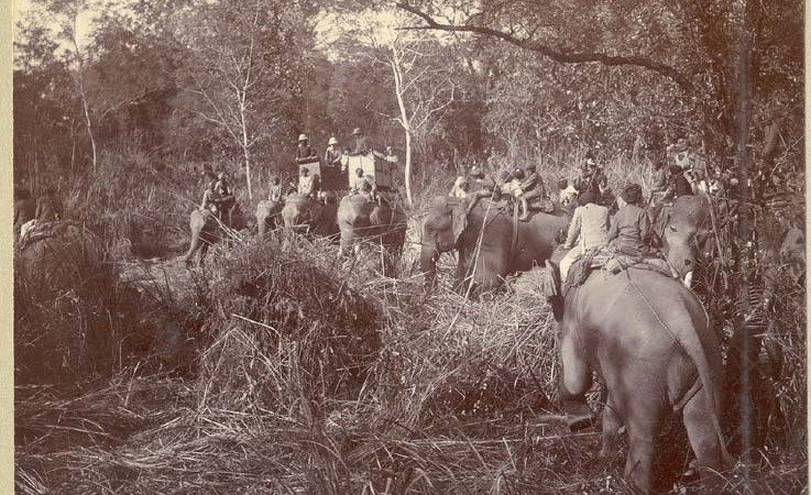 "Mahouts (elephant handlers) and shikaris (hunters) on elephants forming a ""ring"". Image courtesy The Australian National University Digital Collections Library. From Public domain."