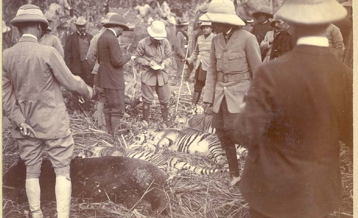 George V takes note of the number killed three tigers and a bear.