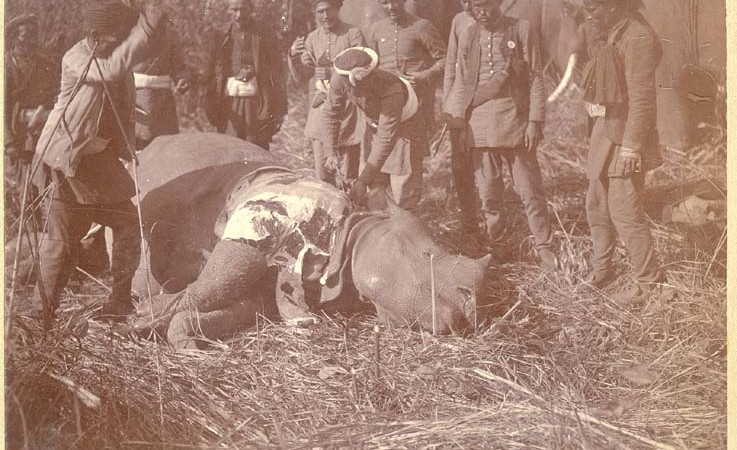 A group of men watch as a dead rhinoceros is skinned and dismembered.