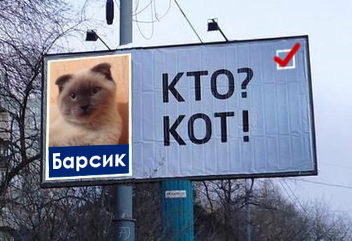 """Who? A cat!"" (In Russian, these words are spelled very similarly.) Screencap: Vkontakte."