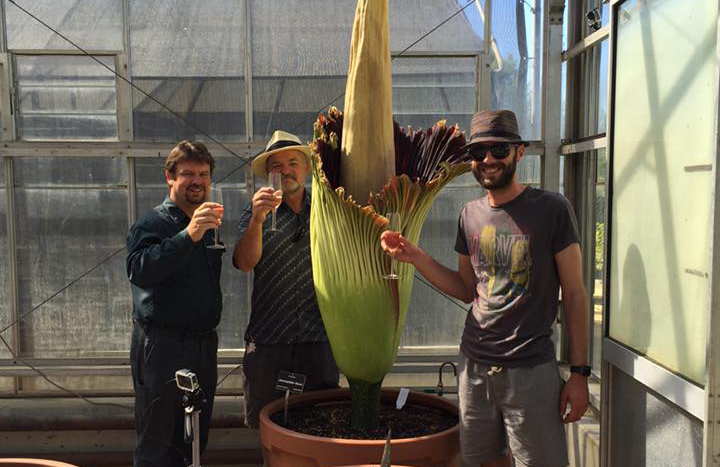 Corpse Flower Team