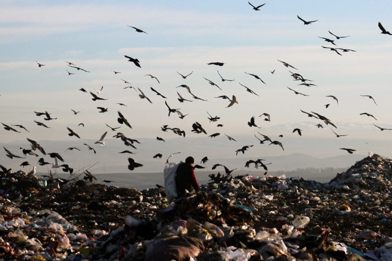Birds have plenty to pick on at the dump. Photo by Azamat Imanaliev. Used with permission.