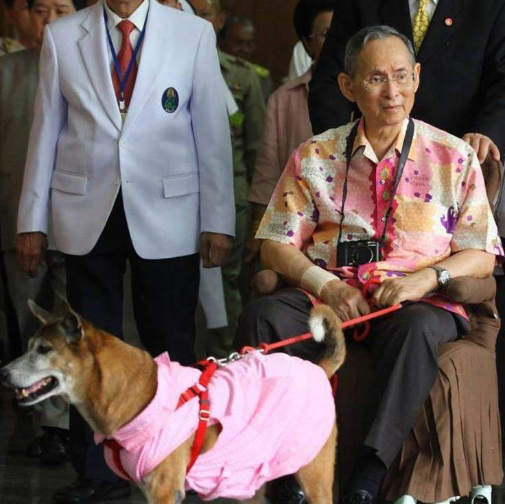 File photo of Thailand's King Bhumibol Adulyadej and his beloved pet dog, Khun Thong Daeng. Photo from the Facebook page of K9Aid,  a dog rescue charity group.