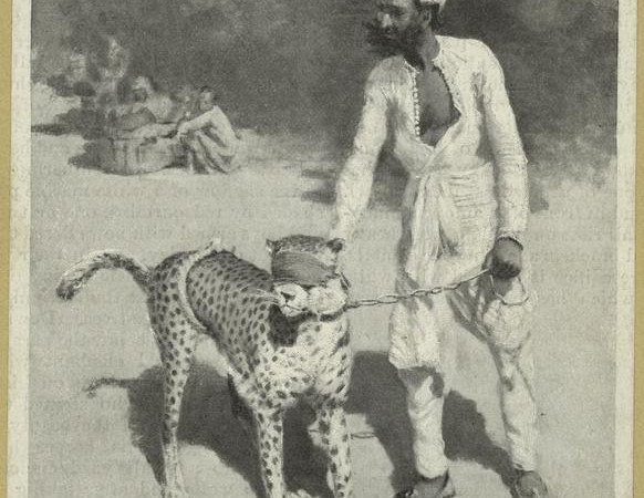 Cheetah and the keeper in Jaipur (1894). Photo from The New York Public Library Digital Collections