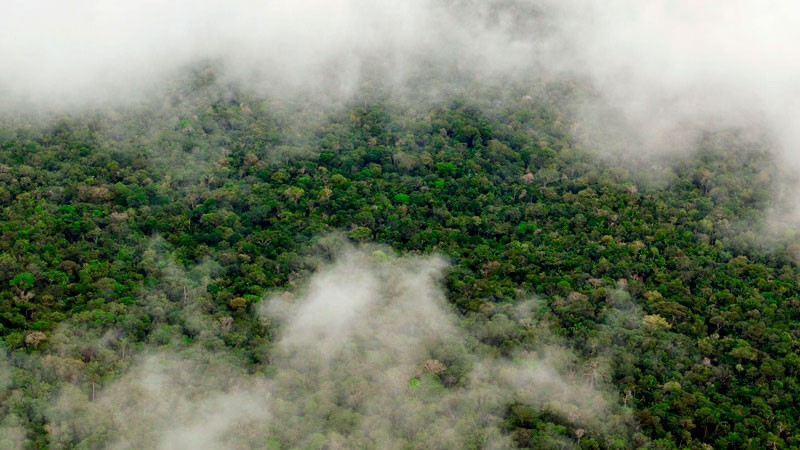 Aerial view of the Amazon Rainforest, near Manaus, the capital of the Brazilian state of Amazonas. Photo by Flickr user Neil Palmer (CIAT). CC-BY-NC-SA 2.0.