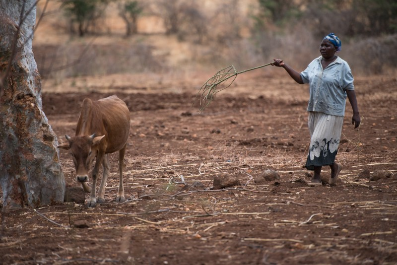 Teresina (45) farms her land during drought in Tharaka Nithi, Kenya, October 2015. Photo by Flickr user Trocaire. CC BY 2.0