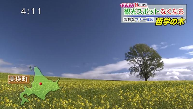 哲学の木 (Philosopher's Tree, Hokkaido)