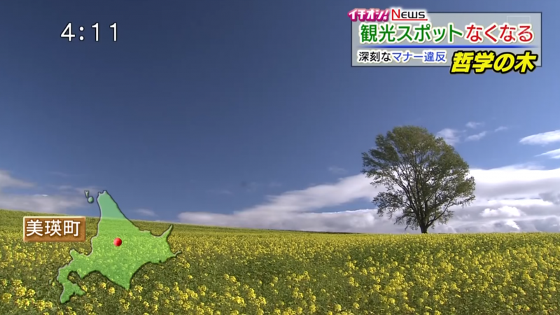 哲学の木 (Árbol del filósofo, Hokkaido)
