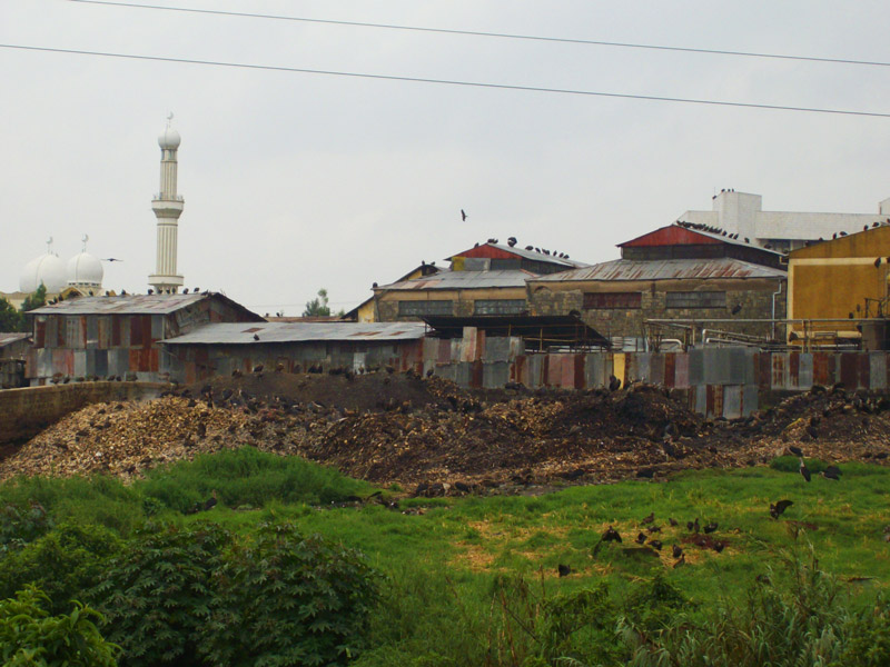 The Addis Ababa abattoir with hills of bones covered with vultures. Photo by Flickr user Magnus Franklin. CC-BY-NC-SA 2.0
