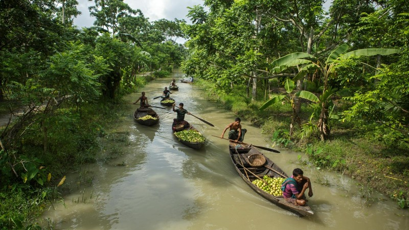 Guava Sellers arriving via canals. Atghor, Swarupkathi, Bangladesh | 2015 Md. Moyazzem Mostakim, Used with permission