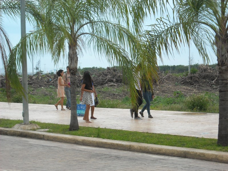Young people out for a stroll next to destroyed Tajamar Mangrove. Photo: Danica Jorden