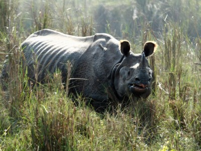 Recent Rhino Translocation in Nepal Hints at Bright Future for the Vulnerable Animals
