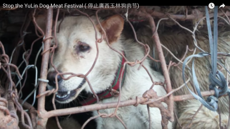 Screen capture from Youtube video: Stop Yulin Dog Meat Festival.