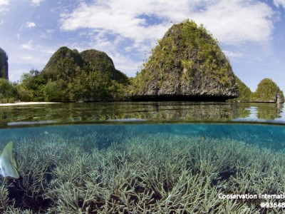 Take a Virtual Reality Tour of West Papua's Coral Reefs