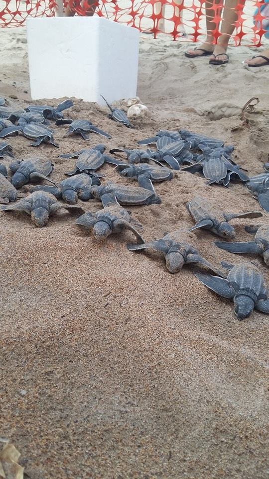 Sea Turtles in Isla Verde.