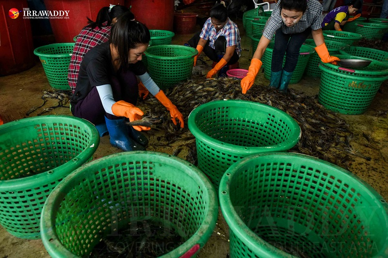 Migrant workers are pictured laboring in the Talaat Kung shrimp market in Mahachai, Samut Sakhon, Thailand. (Photo: JPaing / The Irrawaddy)