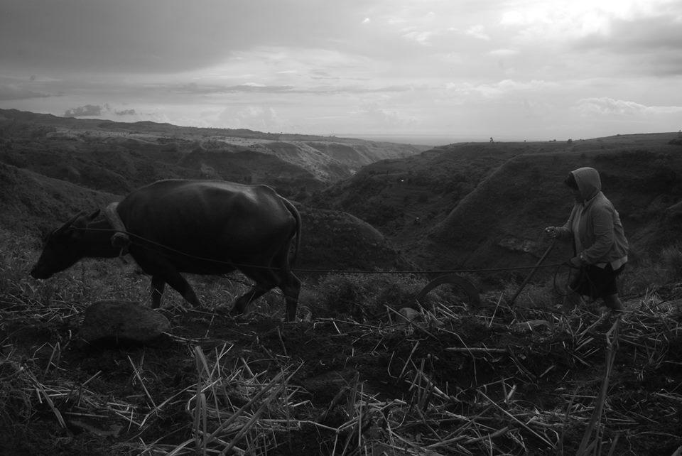 Carabao farming symbolizes the backward agrarian system in the Philippines. Photo courtesy of UMA Pilipinas