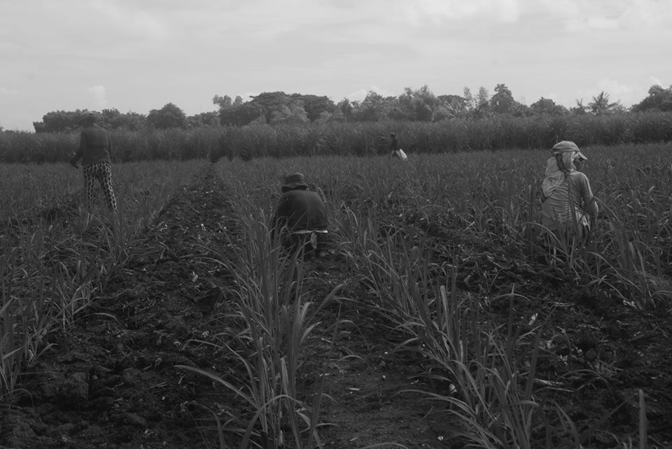 A farmland in Negros. Photo courtesy of UMA Pilipinas