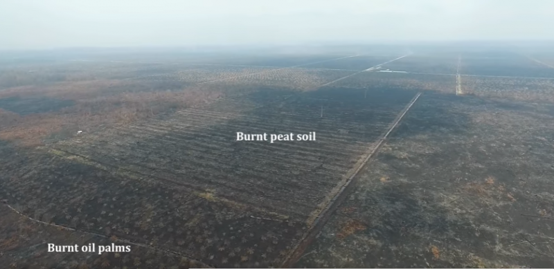 Screenshot of a palm oil field that was cleared by burning in Indonesia. Image is from a drone video uploaded on YouTube.
