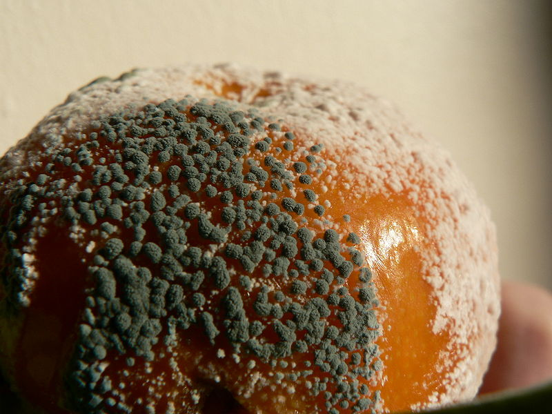 Moldy mandarin orange. Photo released to public domain via Wikimedia Commons.