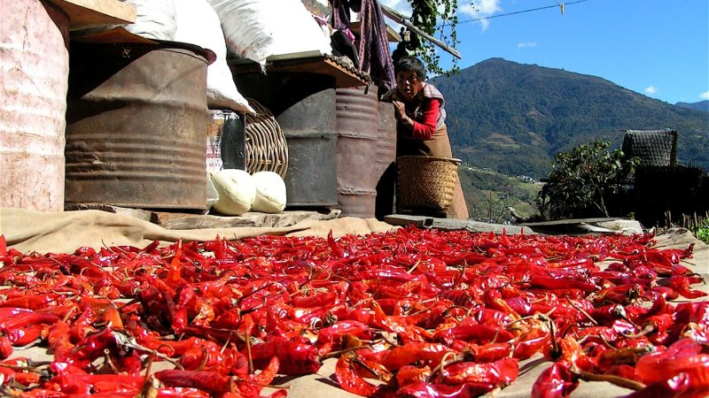 Chili harvest in Bhutan. Image from Flickr by Thomas Wanhoff. CC BY-SA