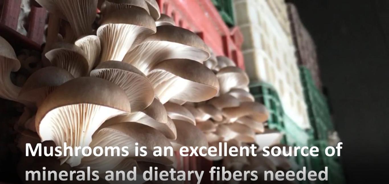 In una città sotto assedio, dei Siriani stanno imparando a coltivare funghi per sopravvivere