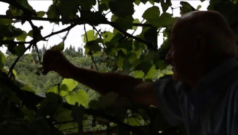 Documentario: Tra le rovine dell'industria del tè della Georgia sovietica